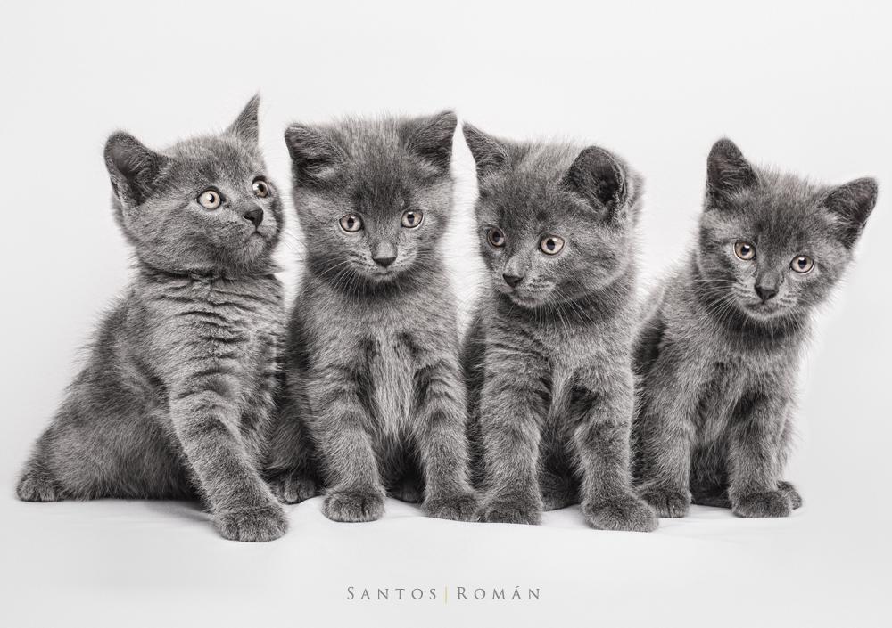 Gatitos posando en casting de animales