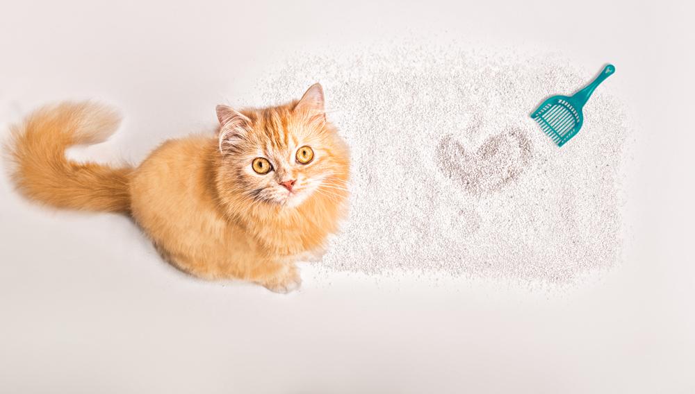 arena para gatos gloria pets