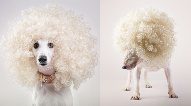 naimai_santosroman_i-wanna-be-your-dog-collection-galgo-bullterrier
