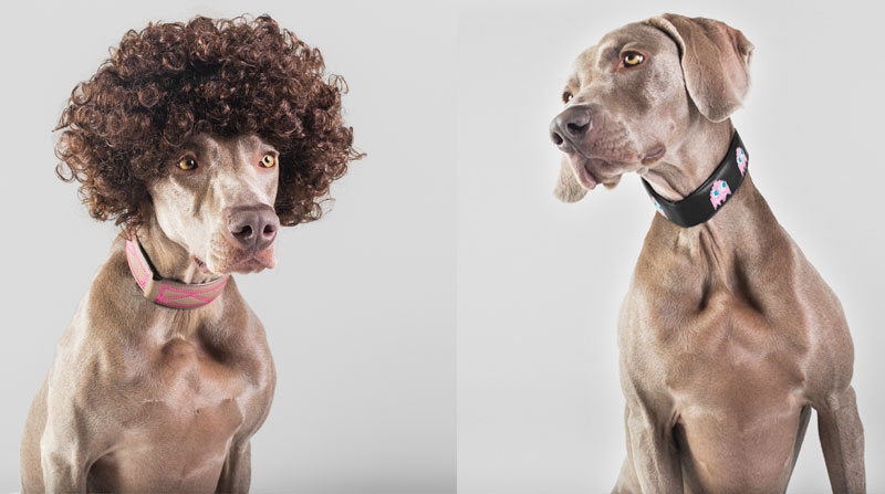 naimai_santosroman_i-wanna-be-your-dog-collection_braco
