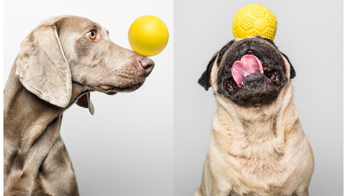 dog play pelotas para perro