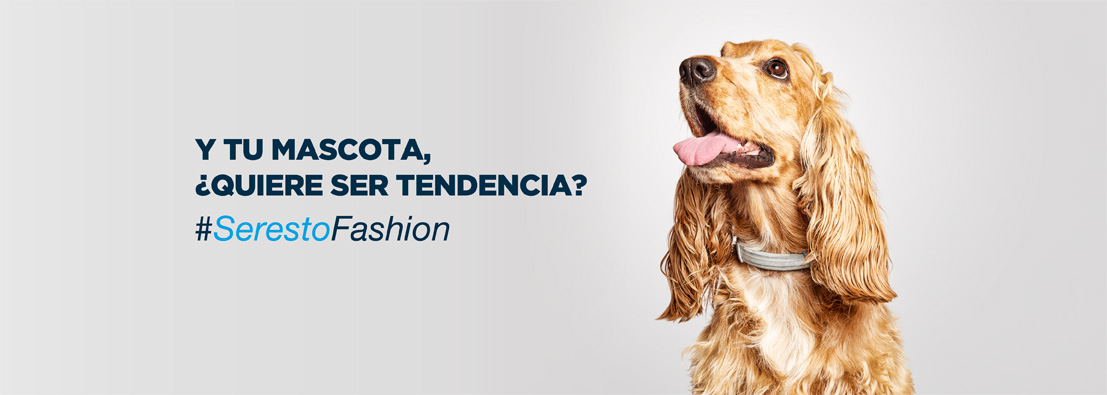 fotógrafo de perros para Seresto de Bayer Seresto Fashion