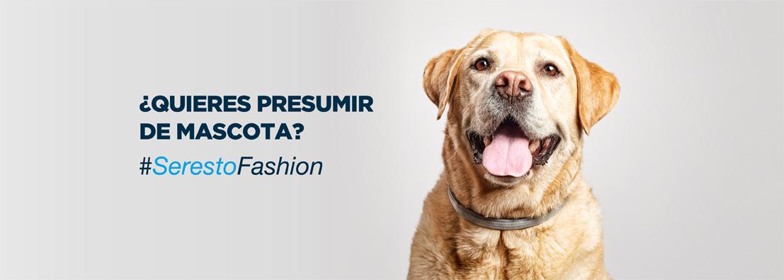 fotógrafo de perros para Seresto de Bayer