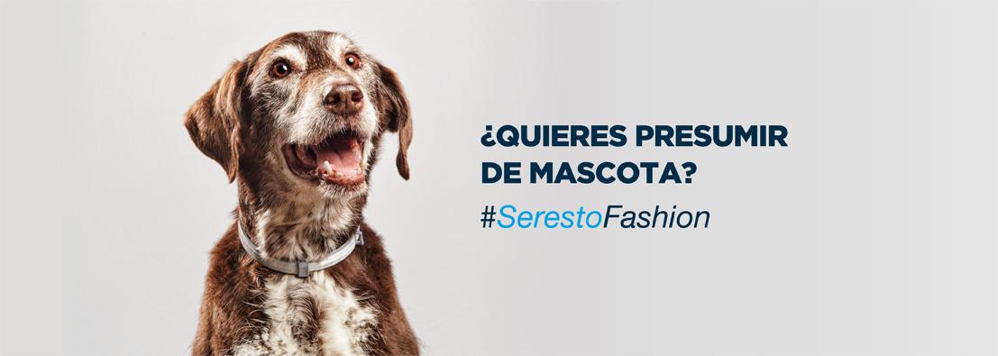 Santos Román fotógrafo de perros para Seresto de Bayer