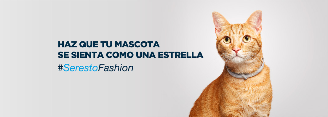 Santos Románfotógrafo de gatos para Seresto de Bayer