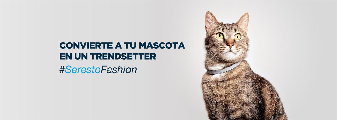 fotógrafo de gatos para Seresto de Bayer