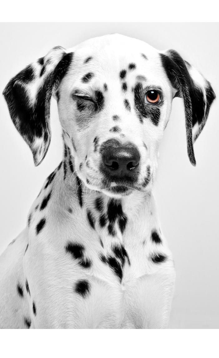 Estudio fotográfico especializado en perros, gatos y otros animales de compañía.