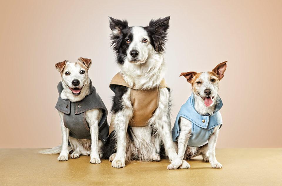 Casting de mascotas. Perros para anuncios de publicidad.