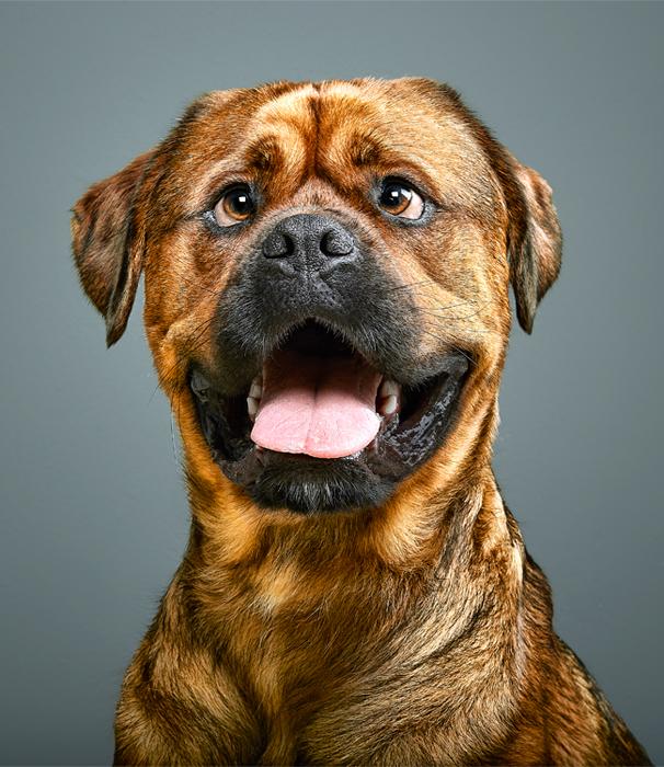 Perro bizco banco de imágenes de perros