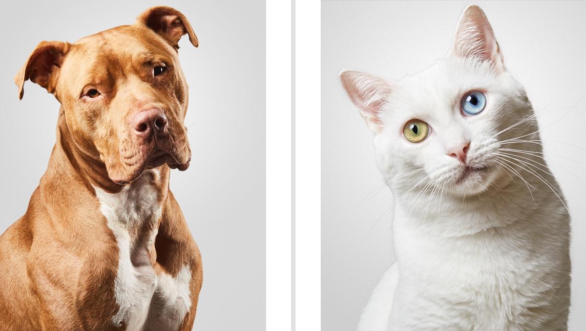 Perro y gato Santos Román