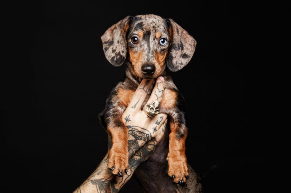 Teckel santos roman fotógrafo de perros