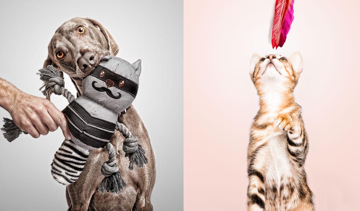 Adiestrador de perros y gatos