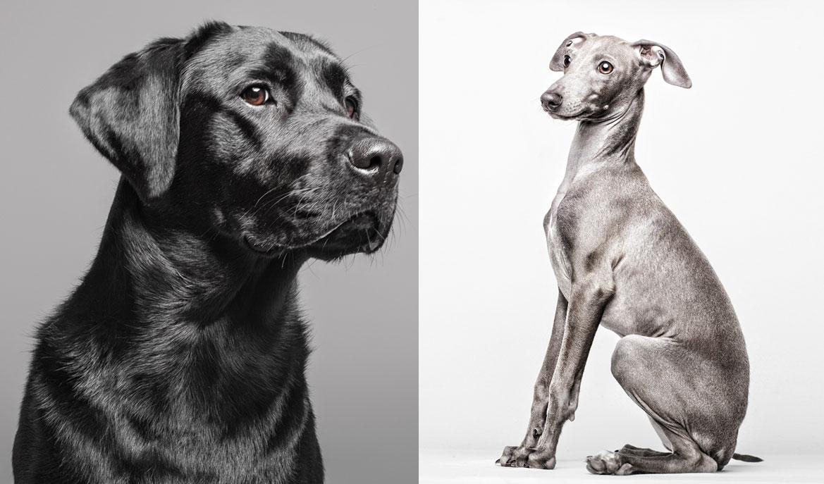 El fotógrafo de perros
