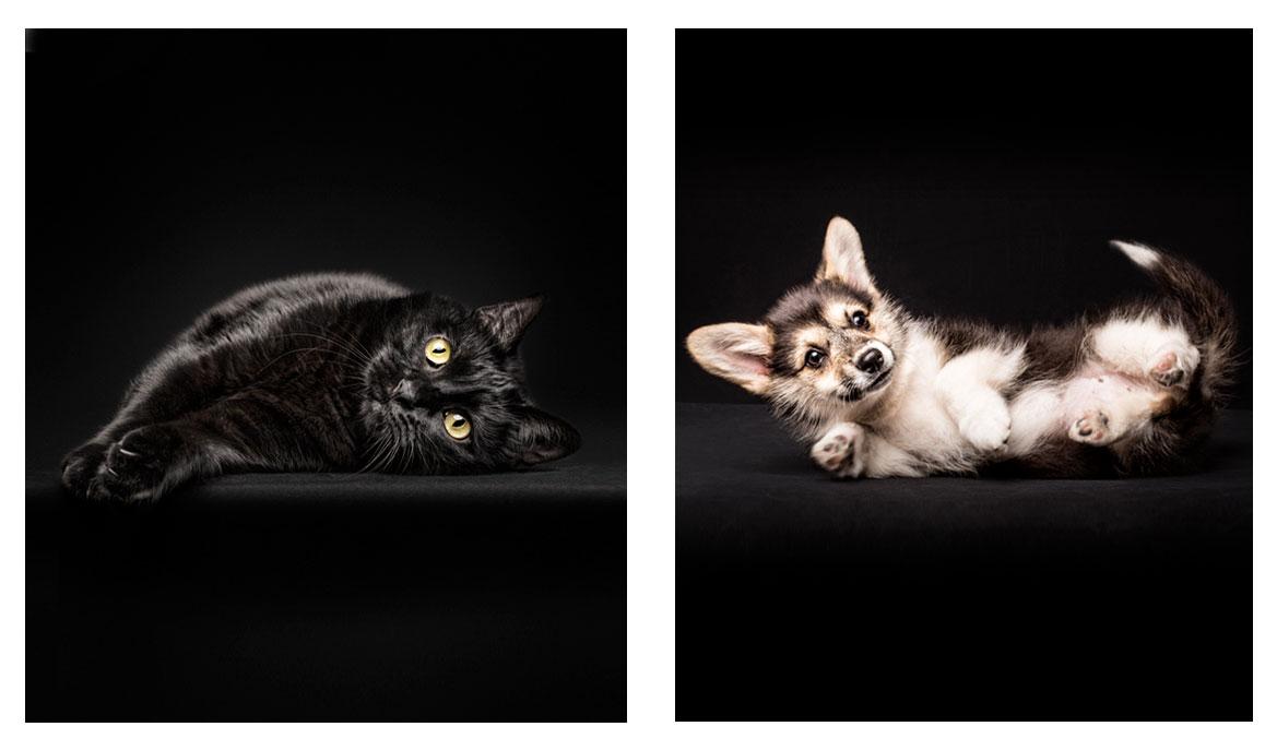 perros y gatos en estudio fotográfico