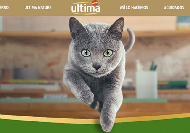 Ultima sterilized cat from Affinity