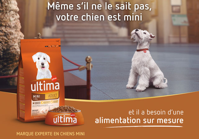 Ultima from Affinity mini dog