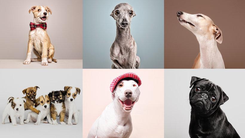 curso fotografía de mascotas