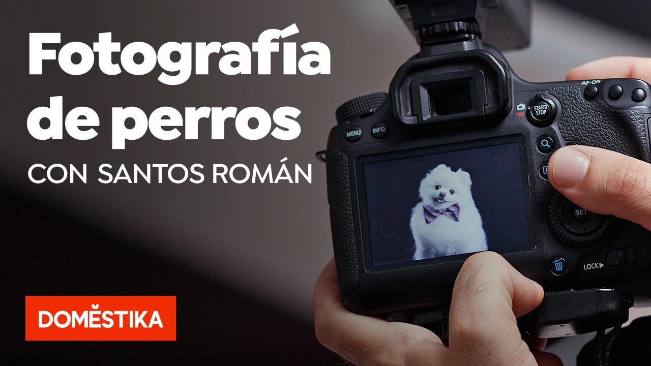 fotografía de perros con Santos Román