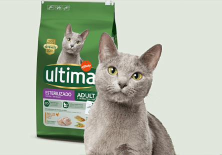 Ultima by Affinity | Cat
