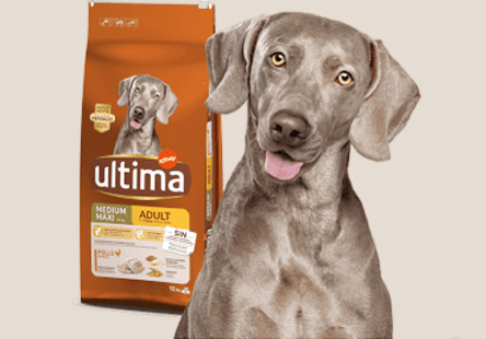 Ultima from Affinity | Dog